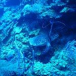 Sea Turtle at Mini Elbow, Turneffe Atoll