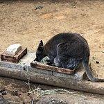 Photo of Edogawa Natural Zoo