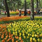 西口から入った人はすぐにこのチューリップに出会える。オランダのキューケンホフ公園以上かも。