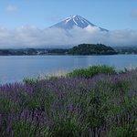 ภาพถ่ายของ Oishi Park
