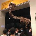 Photo of American Museum of Natural History