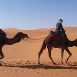 Me and my friend riding camels