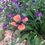 flores en todas partes
