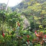 Waimea Valley Foto