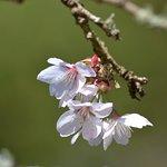 صورة فوتوغرافية لـ Crarae Garden Argyll