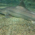 National Aquarium Photo