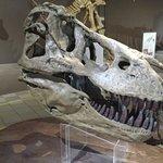 Replica do cranio do Tiranossauro Rex.