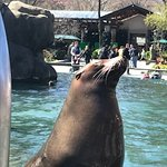 sea lions hamming it up for the crowd