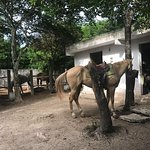 Horse at Rancho Baaxal