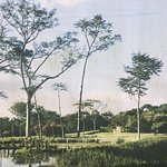 Parque Roberto Burle Marx Foto