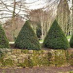 Conical hedges