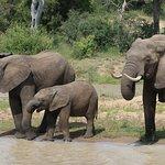 gezinnetje olifant