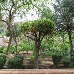 Odeur enivrante des fleurs d'orangers