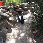 Featherdale Wildlife Park resmi