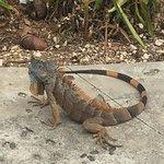 Photo of Cayman Turtle Centre: Island Wildlife Encounter