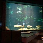 Foto van Sharks Underwater Grill