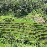 Photo of Tegalalang Rice Terrace