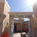Macro Fossiles Kasbah. Very interesting