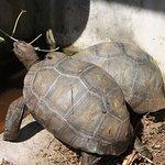 fie year old tortoises