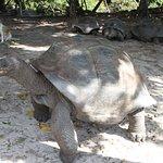 matured large tortoise