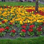 Photo of Princes Street Gardens