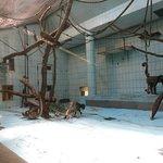 Photo of Frankfurt Zoo (Zoologischer Garten Frankfurt/Main)