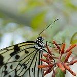 Photo of Jardin Des Papillons