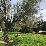 Photo of Agriturismo Moretti
