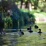 Photo of Punting on the Avon