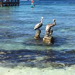 Pelicans resting on the rocks