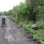 Giant Tortoises along the route