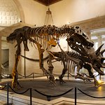 Photo de Natural History Museum of Los Angeles County