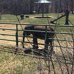 Rosamond Gifford Zoo의 사진