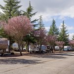Stay in our RV Park and enjoy the hotel's amenities