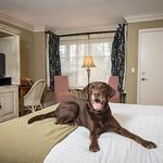 Pet-friendly deluxe king room