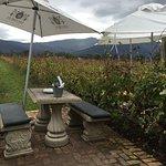 Photo of Bramon Wine Estate