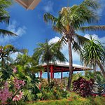 Shaded gazebo is surrounded by coconut palm trees and flowers