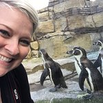 Kristen and the Humboldt Penguins