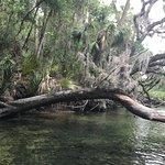 Foto van Adventures in Florida