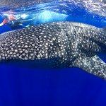 Foto de Ultimate Whale Watch & Snorkel