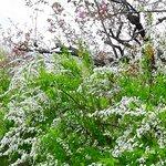 Hanamiyama Park照片