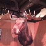 University of Alaska Museum of the North Foto