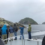 On the bow of the boat looking at NZ Fur Seals