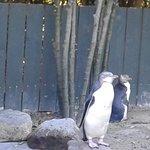 Penguin hospital