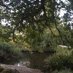 Foto Hedgeley Dene Gardens
