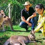 Eastern grey kangaroos - Wildlife, Waterfalls and Wine full day tour