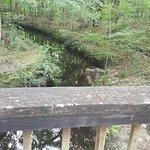 Photo de Jacksonville-Baldwin Rail Trail