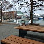 Photo of Navy Pier