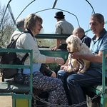 There are free horse and cart rides, play equipment for the children and tractor driving .