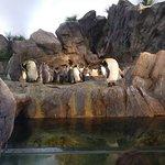 Photo of St. Louis Zoo